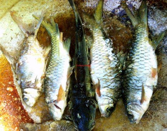 Ngon như cá suối chiên xù cuộn rau rừng - Ảnh 3.