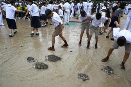 Thả 1.066 con rùa mừng sinh nhật thứ 65 nhà vua Thái Lan - Ảnh 3.