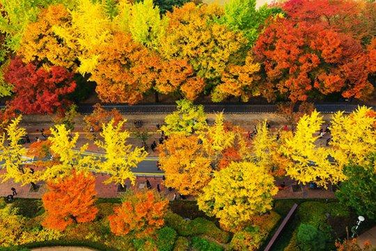 Con đường dính lời nguyền chia tay người yêu ở Hàn Quốc - Ảnh 3.