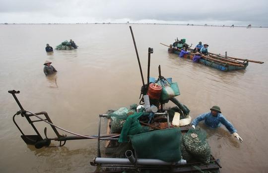 Cận cảnh bắt hàng trăm tấn ngao ở biển Tiền Hải - Ảnh 3.