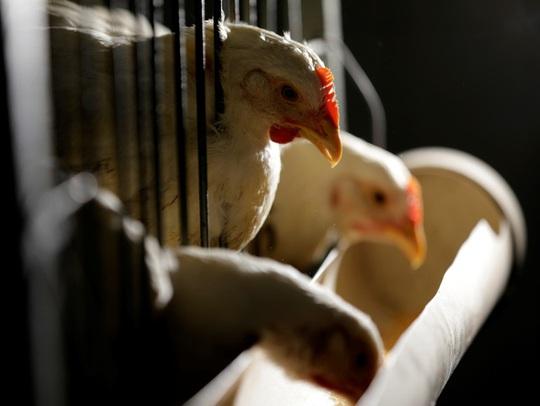 Thịt công nghệ được đầu tư bởi Bill Gates đang khiến ngành chăn nuôi lo sợ - Ảnh 2.