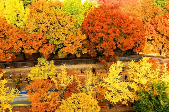 Những đường cây mùa thu đẹp nhất thế giới - Ảnh 3.