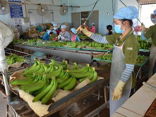 Nông sản Việt 'hái' tiền đô nhờ công nghệ Nhật như thế nào? - Ảnh 1.
