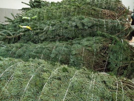 Noel chơi chất: Cây thông 5 mét nguyên gốc từ Đan Mạch về Việt Nam - Ảnh 3.