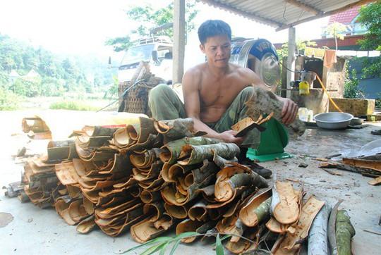Kỳ tích xóm biệt thự tiền tỷ giữa rừng quế ở vùng đất Phong Hải - Ảnh 3.