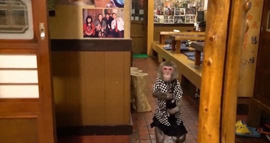 Thuê khỉ làm... bồi bàn, quán rượu ở Nhật Bản gây sốt - Ảnh 3.
