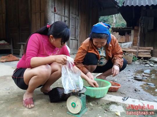 Ngoài dùng để chế biến làm thức ăn, nòng nọc còn trở thành hàng hóa bán khá đắt khách. 1kg nòng nọc đã làm sạch ruột có giá bán từ 100 - 150 nghìn đồng