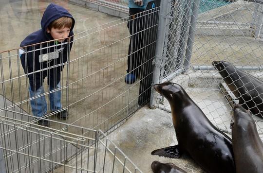 Ryan đặc biệt yêu thích các loài động vật biển. Ảnh: Website Ryan's Recycling.