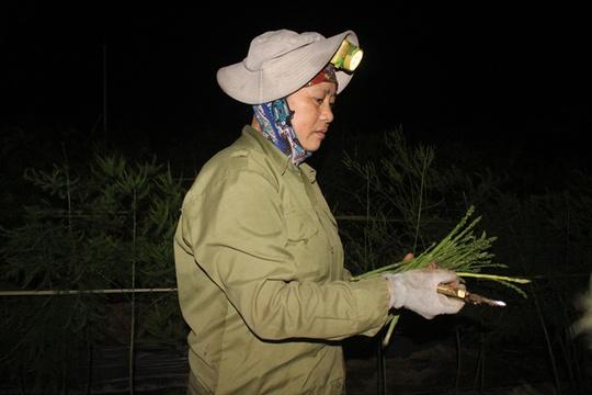 Bà Hồ Thị Ngát (vợ ông Chử) đang thu hoạch măng tây