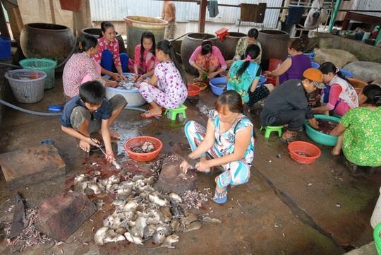 """Chợ chuột Phù Dật ở xã Bình Long, huyện Châu Phú (An Giang) được xem là chợ chuột lớn nhất miền Tây. Hàng ngày chợ hoạt động sôi nổi nhất từ 5 - 9 giờ sáng. Mỗi ngày có từ 3 - 5 tấn chuột được """"xuất xưởng"""" từ đây."""