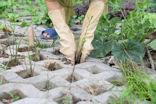 Kiểu trồng rau có 1 không 2 của người Hà Nội - Ảnh 4.