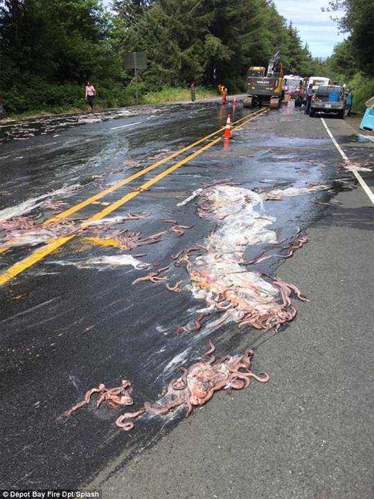 Mỹ: Cảnh tượng nhầy nhụa dễ sợ trên đường cao tốc - Ảnh 4.