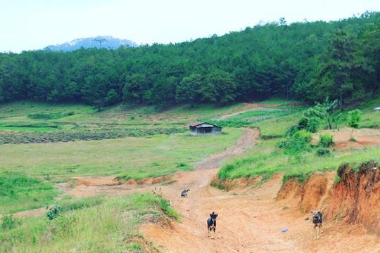 Đưa nhau đi trốn ở rừng Tà Năng- Phan Dũng - Ảnh 4.