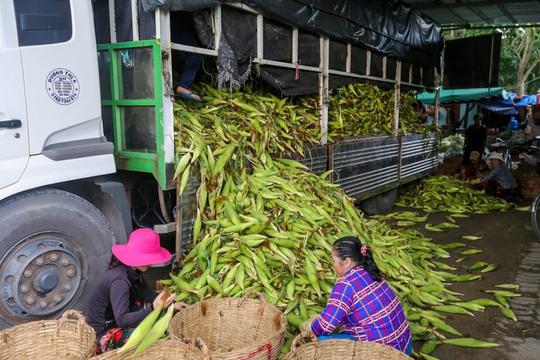 Chợ bắp lớn nhất Sài Gòn - Ảnh 4.