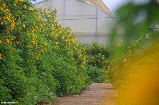 Mê mẩn những cung đường hoa dã quỳ đẹp nhất Việt Nam - Ảnh 4.