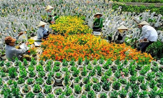 Làng hoa lớn nhất Nam bộ Sa Đéc tất bật vào mùa Tết - Ảnh 4.