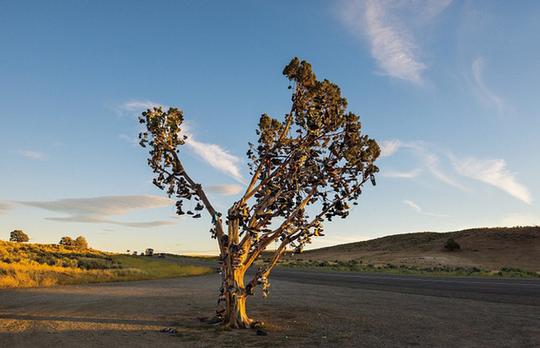 Ngắm những thân cây độc lạ trên thế giới - Ảnh 4.