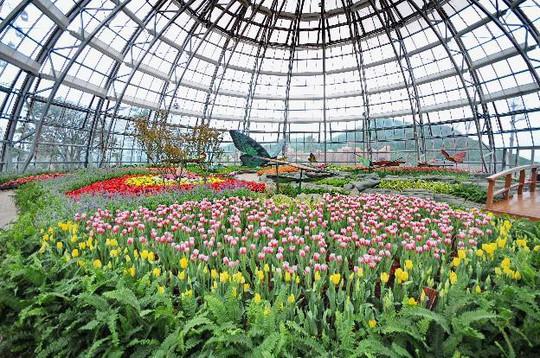 Lạc lối giữa ngàn hoa Tulip tại Vinpearl Land Nha Trang - Ảnh 4.