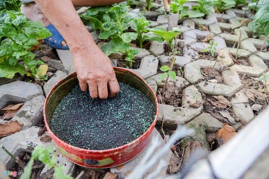 Kiểu trồng rau có 1 không 2 của người Hà Nội - Ảnh 5.