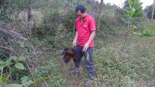 Tận mắt chứng kiến độc chiêu săn gà rừng xứ Nghệ - Ảnh 5.