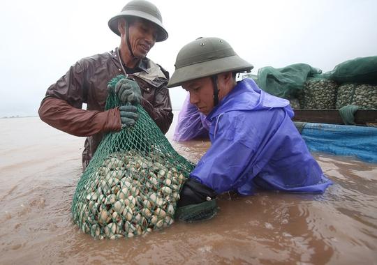 Cận cảnh bắt hàng trăm tấn ngao ở biển Tiền Hải - Ảnh 5.