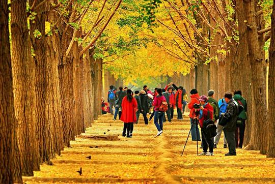 Những đường cây mùa thu đẹp nhất thế giới - Ảnh 5.