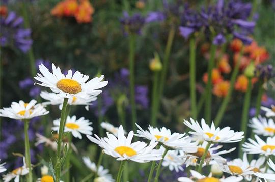 Chốn bình yên bên vườn hoa đẹp như thiên đường của bà lão 83 tuổi - Ảnh 5.