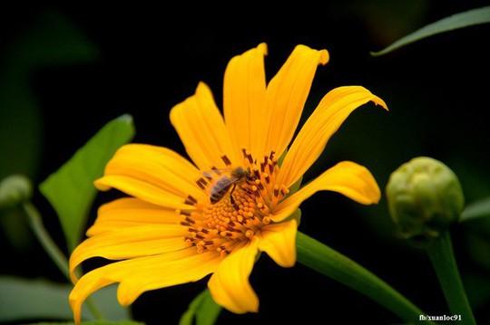 Mê mẩn những cung đường hoa dã quỳ đẹp nhất Việt Nam - Ảnh 5.