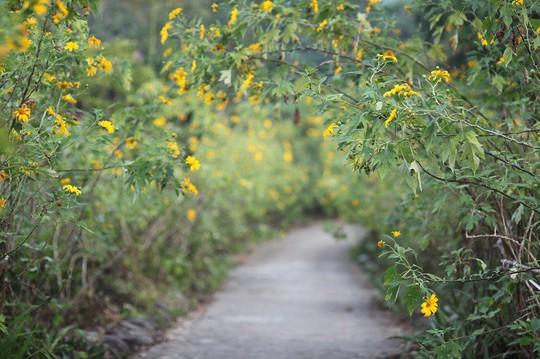 Đẹp nao lòng rừng hoa dã quỳ dưới chân núi Tản - Ảnh 5.