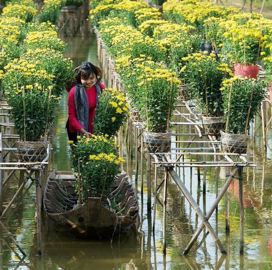Làng hoa lớn nhất Nam bộ Sa Đéc tất bật vào mùa Tết - Ảnh 5.
