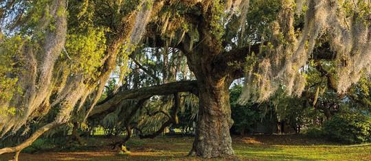 Ngắm những thân cây độc lạ trên thế giới - Ảnh 5.