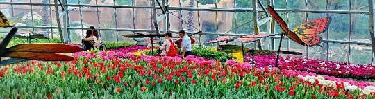 Lạc lối giữa ngàn hoa Tulip tại Vinpearl Land Nha Trang - Ảnh 6.