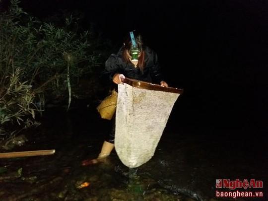 Nòng nọc sống ở môi trường nước trong và sạch, đi xúc vào đêm tối là thời điểm thích hợp và thường bắt được nhiều nòng nọc nhất. Theo bà Lương Thị Đạo, xã Tam Hợp, huyện Tương Dương cho biết: Với khoảng thời gian từ 1 đến 2 giờ đồng hồ, một người có thể xúc được 1 đến 2 kg nòng nọc