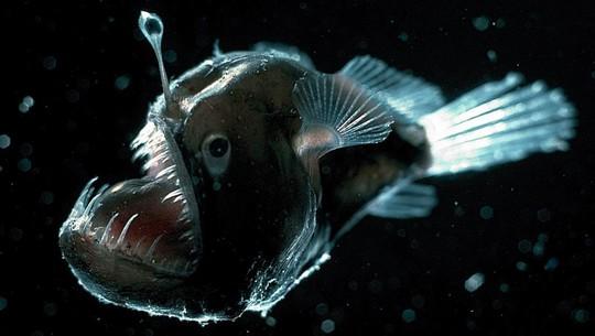 8 sinh vật kỳ dị dưới đáy đại dương - Ảnh 6.