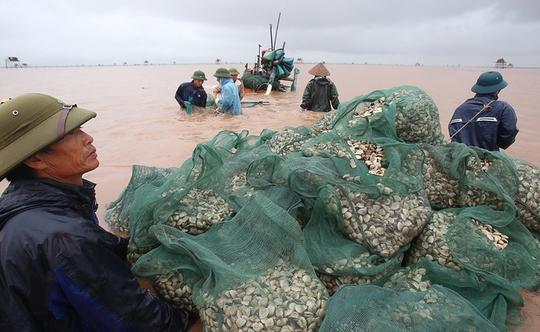 Cận cảnh bắt hàng trăm tấn ngao ở biển Tiền Hải - Ảnh 6.