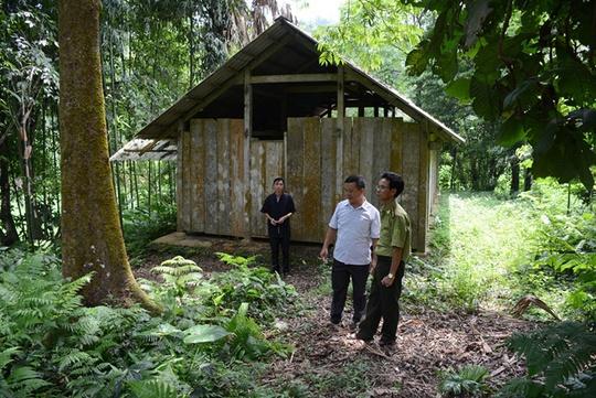 Có một rừng quế thiêng, thu hơn 500 tỉ mỗi năm - Ảnh 2.