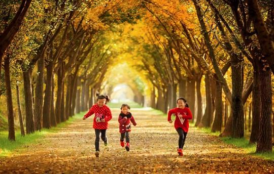 Những đường cây mùa thu đẹp nhất thế giới - Ảnh 6.