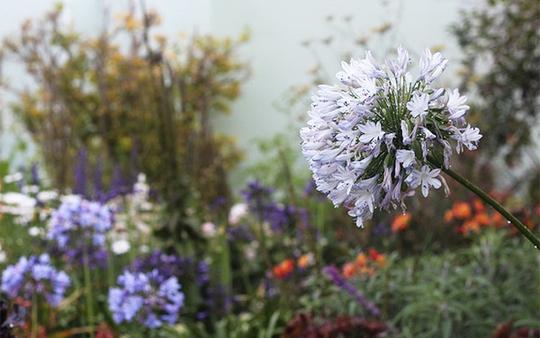 Chốn bình yên bên vườn hoa đẹp như thiên đường của bà lão 83 tuổi - Ảnh 6.