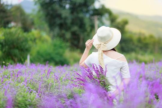 Ngẩn ngơ với thung lũng hoa ở cao nguyên Lào Cai - Ảnh 2.