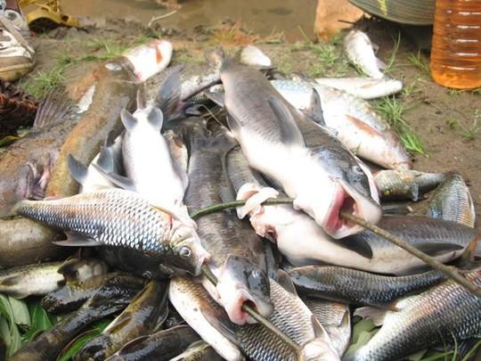 Những loài cá tiến vua đắt đỏ nhưng vẫn được săn lùng - Ảnh 6.