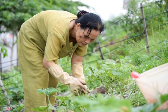Kiểu trồng rau có 1 không 2 của người Hà Nội - Ảnh 7.