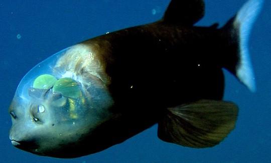 8 sinh vật kỳ dị dưới đáy đại dương - Ảnh 7.