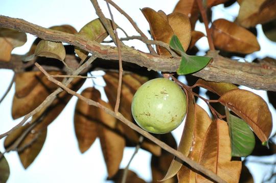 Vườn cây ăn trái 4 tỉ đồng như công viên của bà mẹ 2 con tại TP HCM - Ảnh 7.