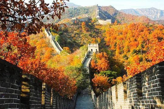 Những đường cây mùa thu đẹp nhất thế giới - Ảnh 7.