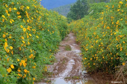 Mê mẩn những cung đường hoa dã quỳ đẹp nhất Việt Nam - Ảnh 7.