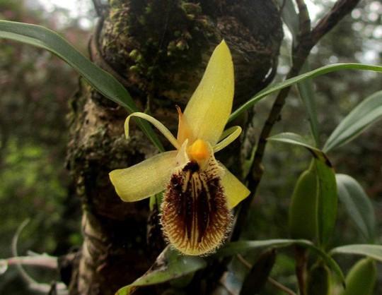 Chiêm ngưỡng hoa phong lan rừng Sa Pa - Ảnh 7.