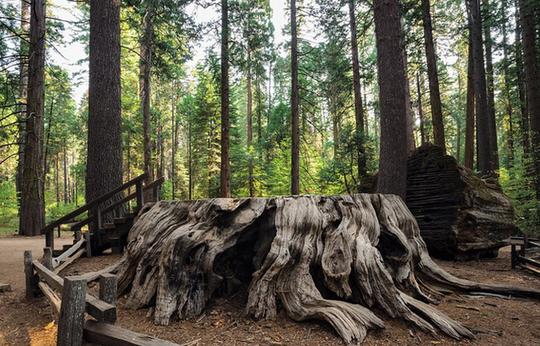 Ngắm những thân cây độc lạ trên thế giới - Ảnh 7.