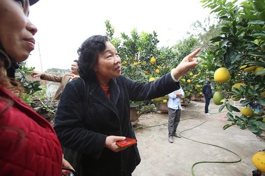 Trước Tết hơn 20 ngày, khách hàng bắt đầu tìm đến mua cây bưởi Diễn. Những cây nhiều lộc, có hoa và sai quả, gốc lớn thường được khách ưu tiên chọn lựa.