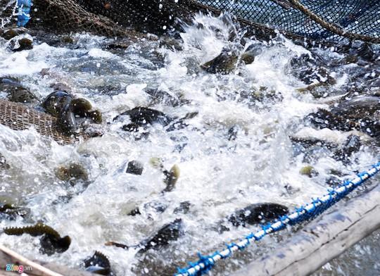 Đã mắt ngắm tôm hùm, cá mú ở biển Sa Huỳnh