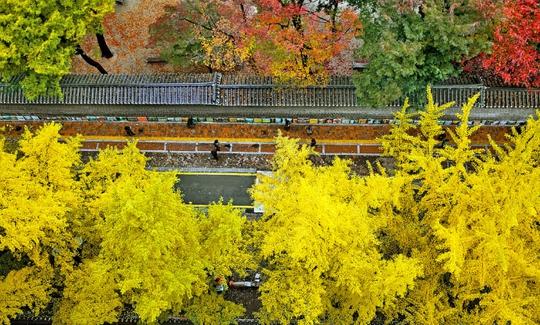 Con đường dính lời nguyền chia tay người yêu ở Hàn Quốc - Ảnh 8.